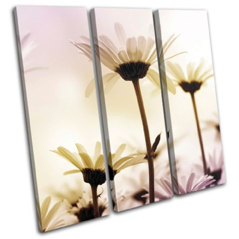Daisies Flowers Floral - 13-1304(00B)-TR11-LO